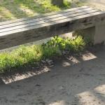 公園などにありそうなベンチ