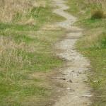 草むらのうねうねとした道